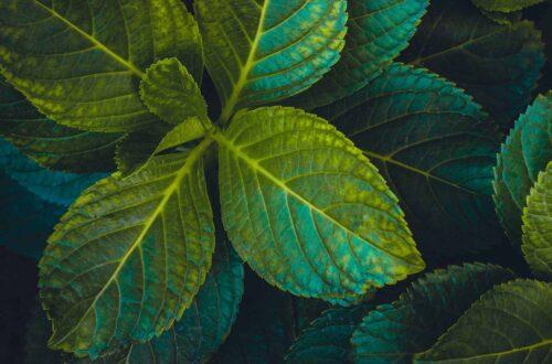Its-Just-Elo-Bonnes-habitudes-Green