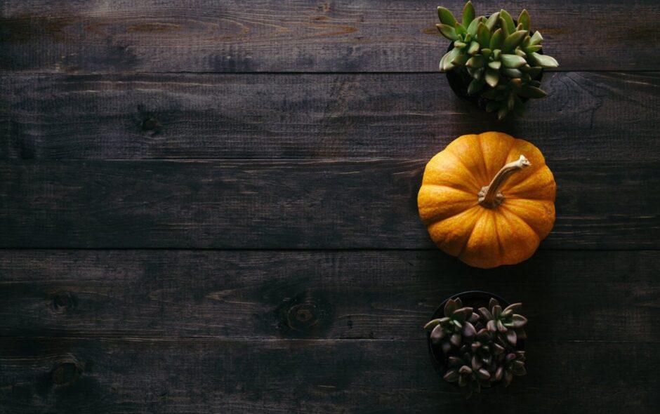 Its-Just-Elo_Favoris-octobre